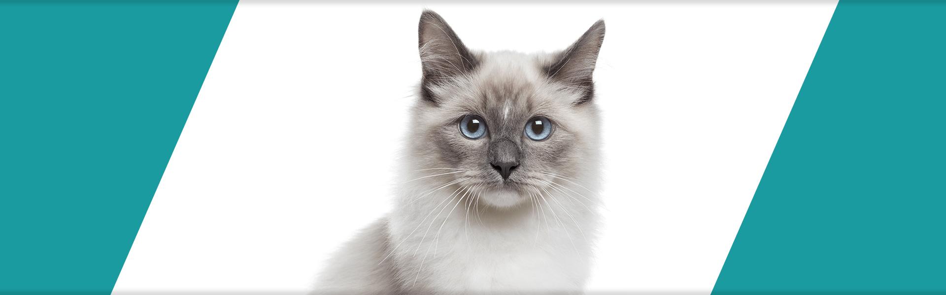 LEÓN pet food header bocconi gatto