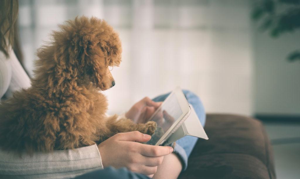 cagnolino guarda un tablet con la sua giovane padroncina