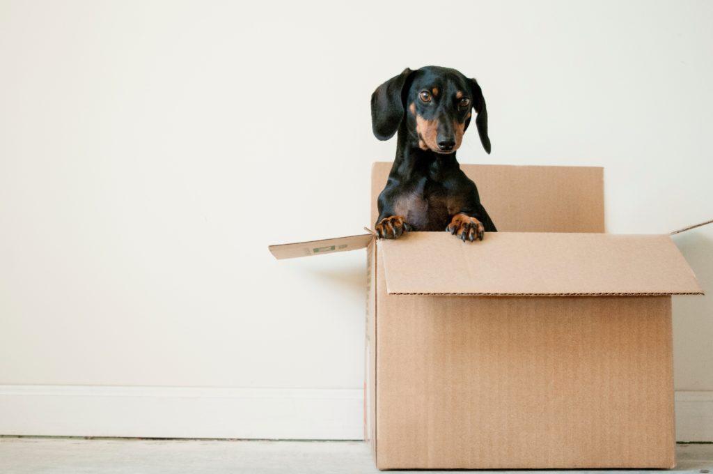 un cane dentro una scatola di cartone